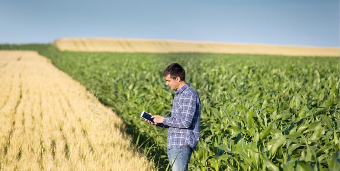 IoT Landwirtschaft Smartfarming