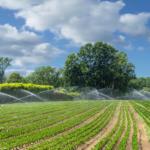 Steuerung Gemüse Bewässerung